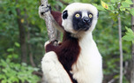 The Duke Lemur Center is hosting a symposium about lemur conservation in Madagascar amidst deforestation Monday.