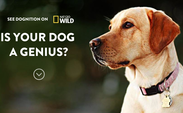 Dognition.com, a website directed by Duke professor Brian Hare that analyzes the psychology of dogs, has been featured on a National Geographic WILD series. | Special to The Chronicle