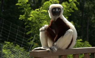 Jovian, pictured above, died at the age of 20 after starring as Zoboomafoo in the eponymous television show.