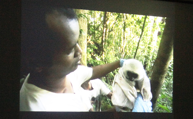 A documentary about critically endangered silky sifaka lemurs featuring Erik Patel, a postdoctoral researcher at the Duke Lemur Center, was presented on campus Monday night.