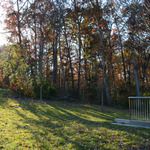 A portion of the Anderson Woods, pictured above, is the site of the new Health and Wellness Center scheduled to break ground in Spring 2015.