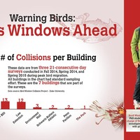 The Bird Window Collision Project found that Duke's bird safety is one of the worst in the United States.